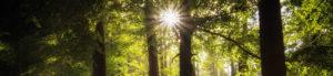 Headerbild Sonne im Wald